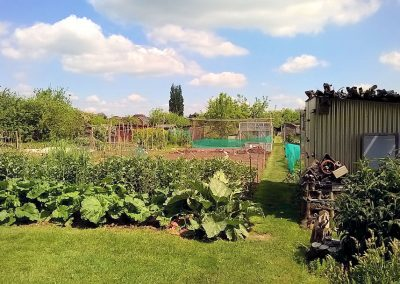Rhubarb plants, bean poles, a shed and a fruit cage in the distance
