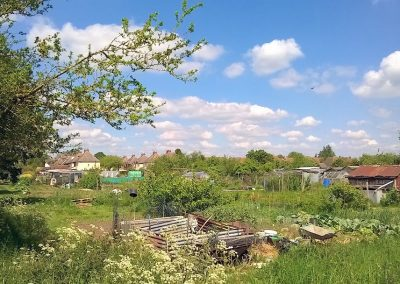 Allotments on a sunny day in May looking towards Pineham Avenue in the distance